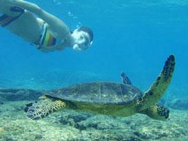 Molokai outdoor activities molokai and kalaupapa where for Molokai fish and dive